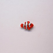 "1"" fish-clownfish"