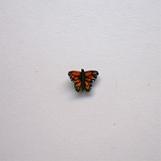"1"" butterfly-monarch - Click Image to Close"