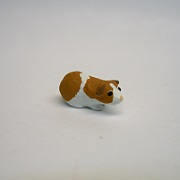 "1"" guinee pig-short hair"