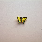 "1"" butterfly-tiger swallowtail"