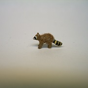 "1/4"" raccoon- baby walking"