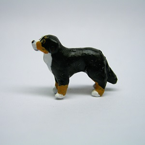 "1/4"" bernese mountain dog"